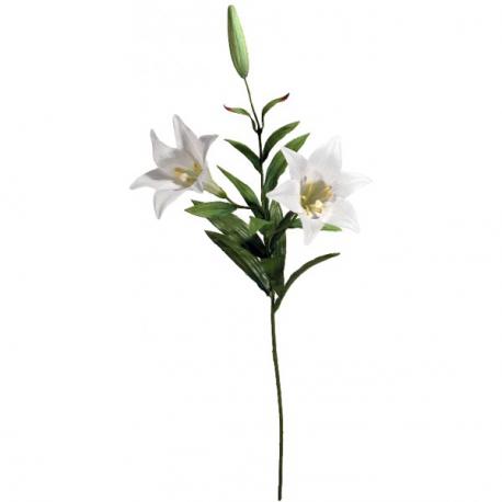 Location de Fleur de Lys Blanche